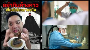 เพจหมอแล็บ เตือนอย่ากินค้างคาว เหตุเสี่ยงติดโคโรนาไวรัส และโรคหลายชนิด