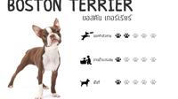 10 สายพันธุ์น้องหมาเลี้ยงง่ายในคอนโด