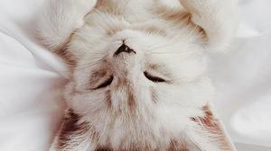 22 กุมภาพันธ์ วันแห่งแมว ของประเทศญี่ปุ่น