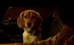 """""""คีอานู รีฟส์"""" ยืนยัน John Wick 2 จะไม่เห็นหมาน้อยต้องเจ็บตัว!"""