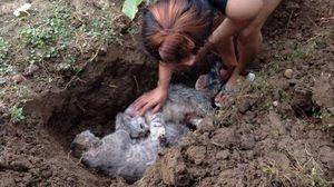 เจ้าของใจสลาย แมว 5 ตัวตายสยอง ถูกสุนัขบุกขย้ำถึงในกรง !!