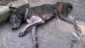 ร้องเอาผิด คนใจบาป ทุบหัวสุนัขทิ้งให้อดอาหารจนตาย