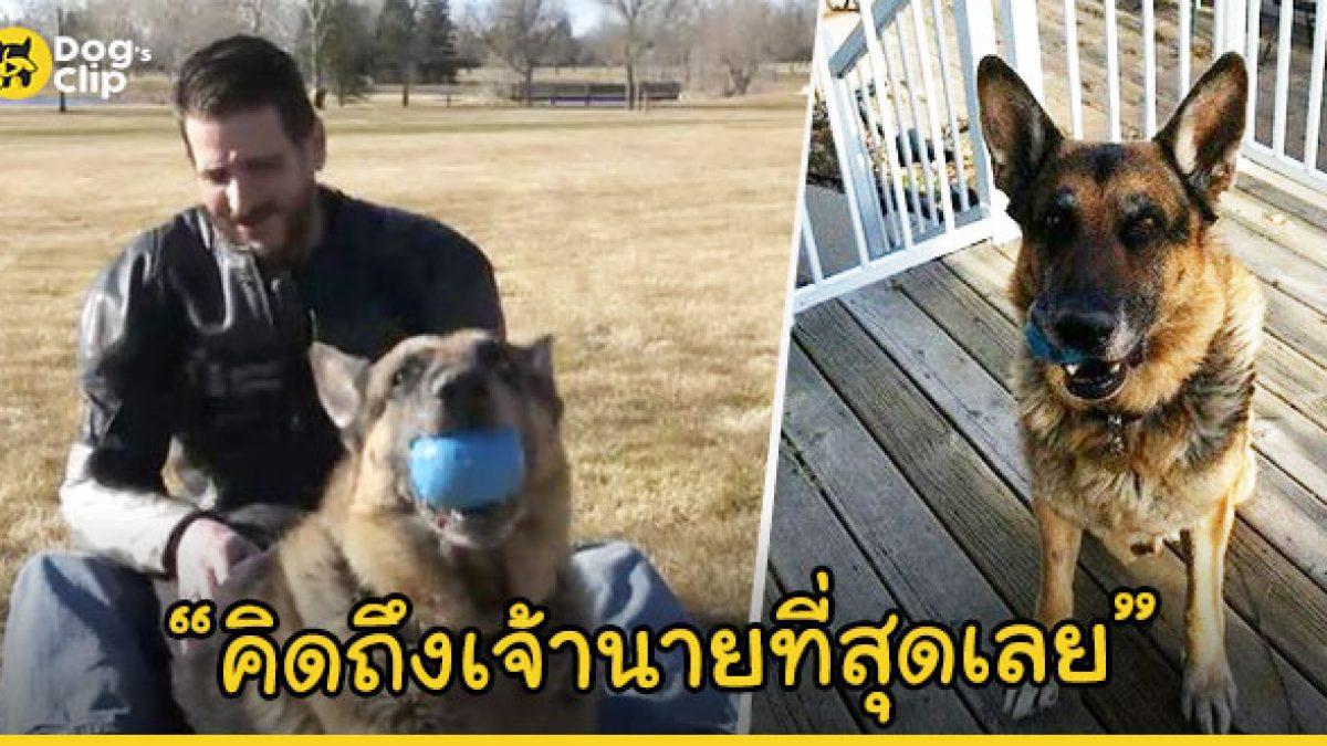 ชายหนุ่มโดนขโมยน้องหมาหายไปจากบ้านนานนับปี แต่พอจะไปขอรับตัวใหม่มาเลี้ยงกลับเจอน้องหมาที่หายไป