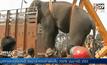 ช้างตกมันบุกอาละวาดในอินเดีย