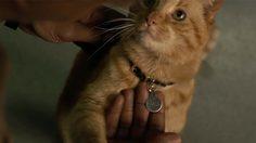 มันเป็นแมวประหลาด!! นักแสดงนำหนัง Captain Marvel พูดถึงแมวของ กัปตันมาร์เวล