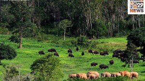 อุทยานแห่งชาติกุยบุรี ออกกฎส่องสัตว์ ลดอันตรายที่อาจเกิดขึ้น