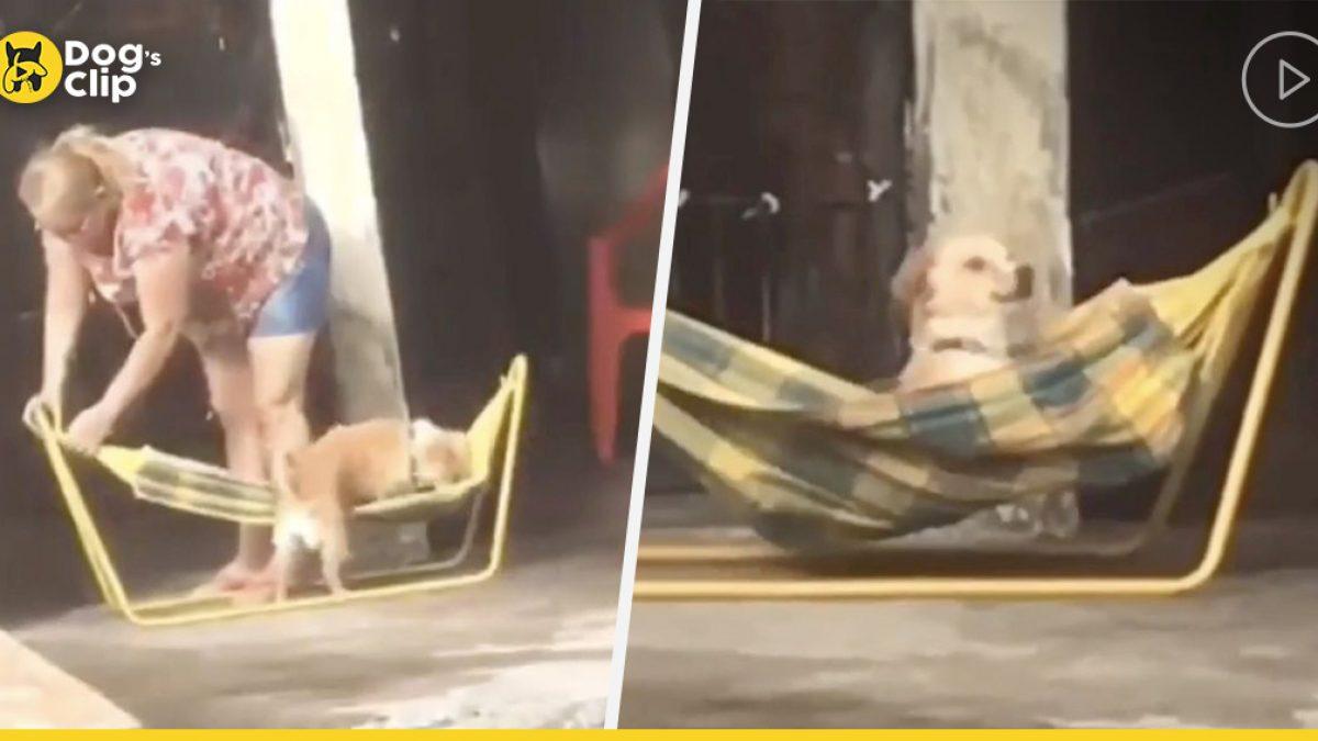 น้องหมาในบราซิลใช้ชีวิตเยี่ยงเจ้าหญิง นอนเปลญวนชายตามองผู้คนที่เดินผ่านไปมา