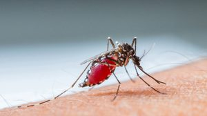 9 วิธีป้องกันไข้เลือดออก โรคฮิตหน้าฝน ที่คุณควรระวัง