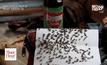 ฝูงแมลงวันอาละวาดชาวบ้าน 800 หลังเดือดร้อนหนัก