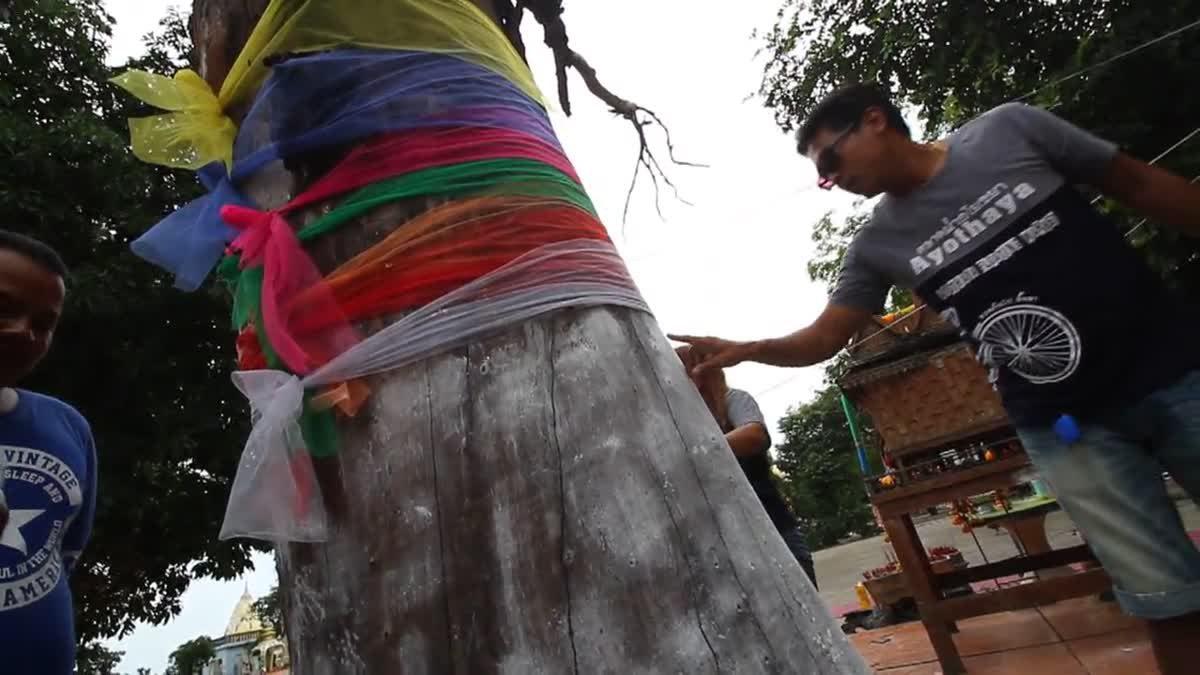 แห่ขอเลขเด็ด! ต้นตะเคียน อายุ 100 ปี ยืนต้นตายข้างพระอุโบสถ