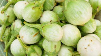 มะเขือเปราะ ประโยชน์ของผักพื้นบ้าน ที่คุณอาจไม่เคยรู้มาก่อน !!