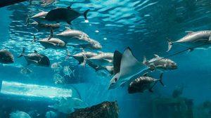 วันเดย์ทริป เดินดูโลกใต้ทะเล ที่พิพิธภัณฑ์สัตว์น้ำบางแสน จ.ชลบุรี ค่าเข้า 80 บาท