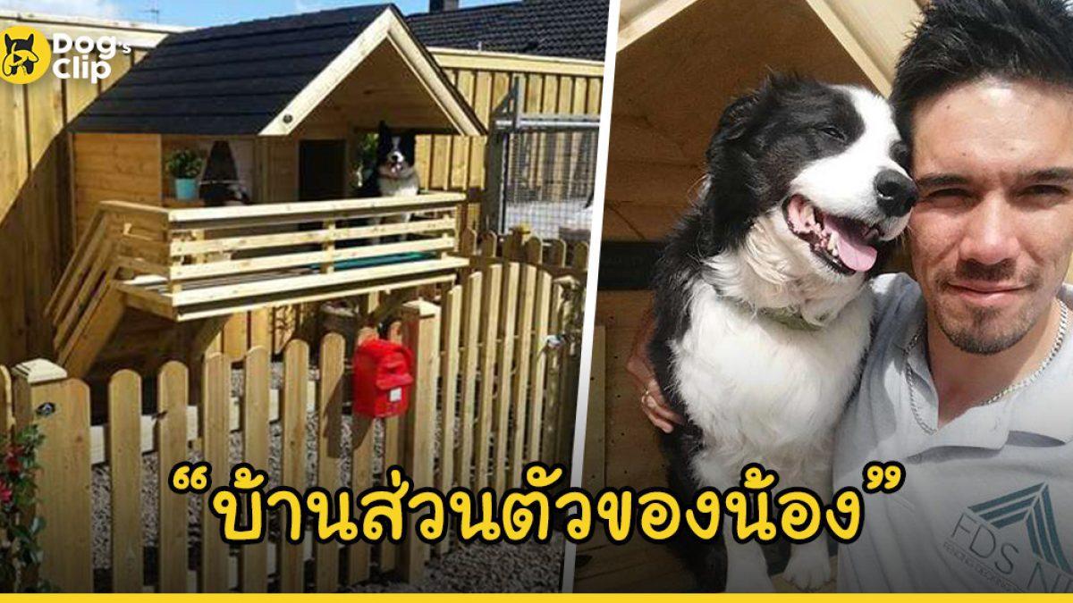 น้องหมายิ้มแป้น หลังเจ้านายใจดีสร้างบ้านส่วนตัวให้อยู่ในช่วงที่เขาออกไปทำงาน