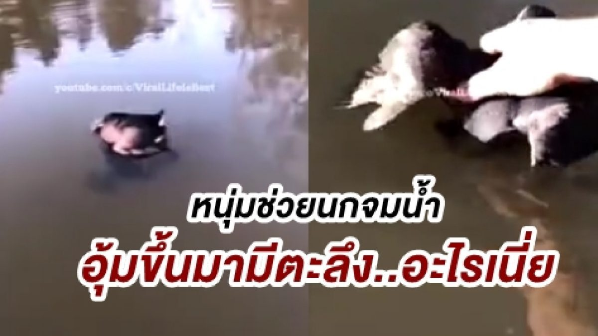 แทบไม่เชื่อสายตา! เมื่อหนุ่มกำลังช่วยนกที่จมน้ำ ยกขึ้นมาถึงกับผงะมันโดน...งับอยู่