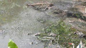 ชาวบ้านสุดทน! ผู้ประกอบการ ลอบปล่อยน้ำเสียลงทะเล