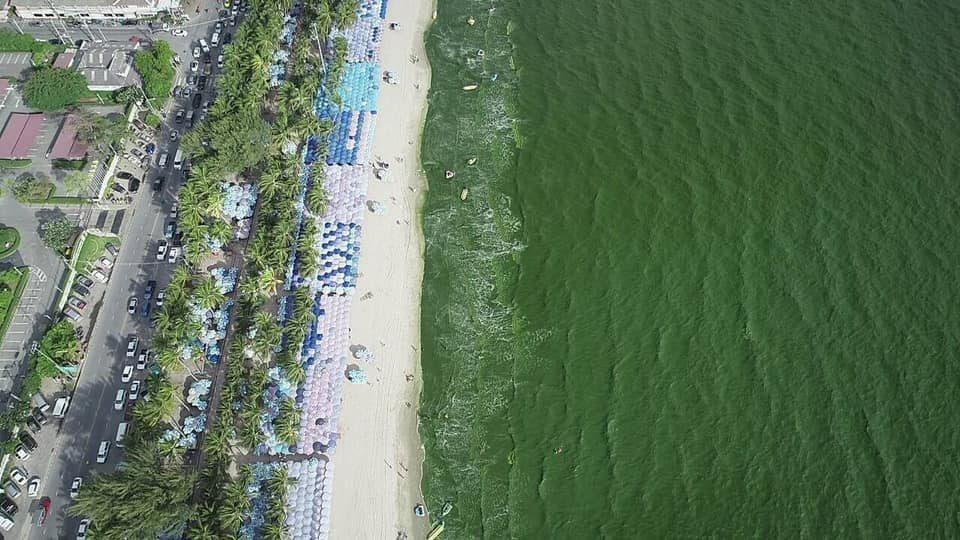 นายกฯ ตุ้ย แจง ปรากฏการณ์น้ำทะเลเขียวที่บางแสน
