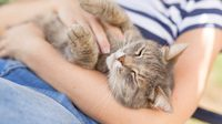 ทาสแมวมาฟัง! 5 โรคติดต่อจากสัตว์เลี้ยง ที่คุณต้องระวัง