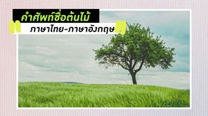 คำศัพท์ชื่อต้นไม้ ภาษาไทย-ภาษาอังกฤษ เรียกอะไรกันบ้าง