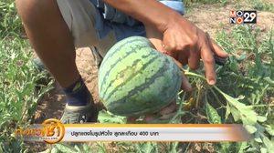 ไอเดียเพิ่มมูลค่าสินค้า! เกษตรกรไทยปลูกแตงโมรูปหัวใจ ลูกละเกือบ 400 บาท