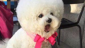 น่ารักฟูฟ่อง! น้องหมา Tori ที่ใครหลายคนเห็นแล้วตกหลุมรัก