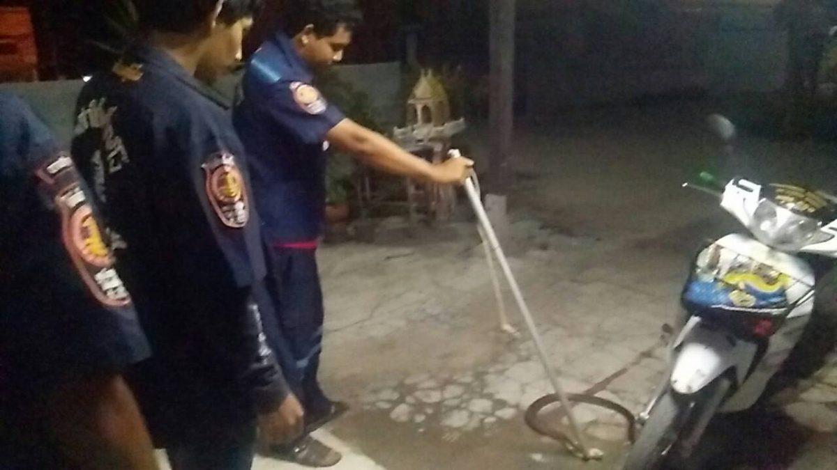 สุดยอด! แมวต่อสู้กับงูเห่า ช่วยชีวิตเจ้าของบ้าน ก่อนถูกฉกตาย
