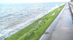 แปลกตา! สาหร่ายสีเขียว โผล่เกาะเต็มบันไดเขื่อนกันคลื่น หาดปราณบุรี