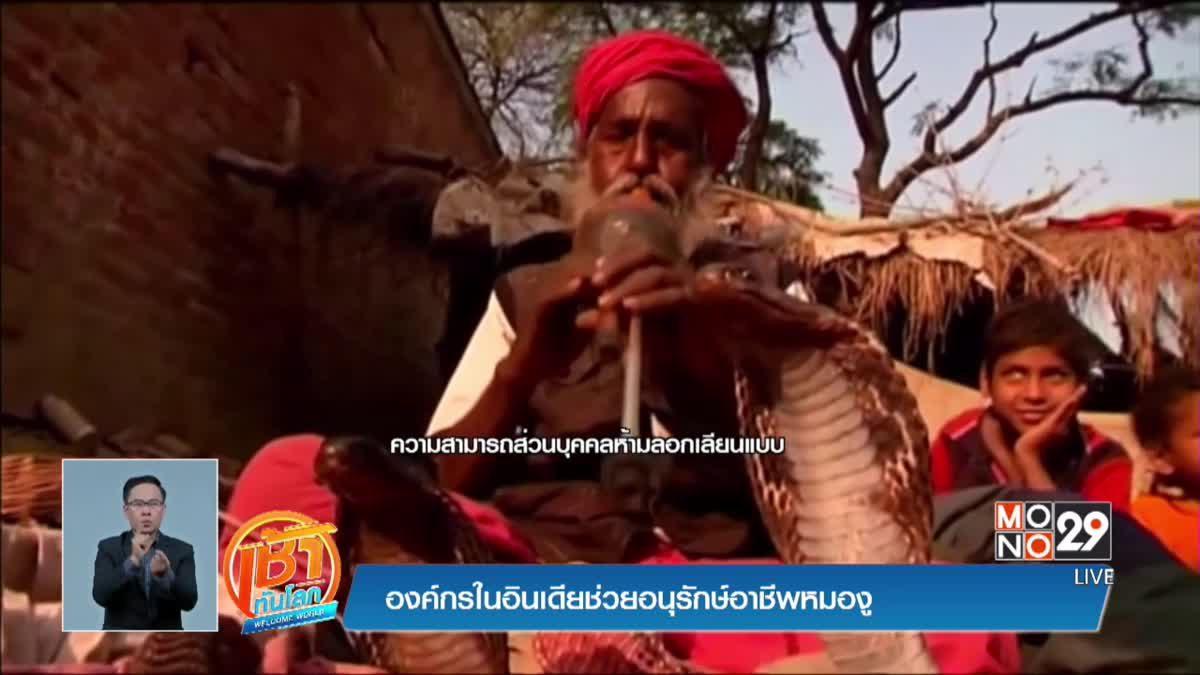 องค์กรในอินเดียช่วยอนุรักษ์อาชีพหมองู
