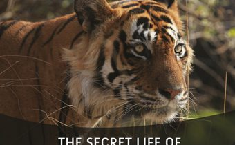 Secret Life of Predators โลกเร้นลับสัตว์นักล่า