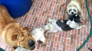 เพจ WATCHDOG ประสานตร. เข้าช่วยหมา 6 ตัว หลังถูกเจ้าของทิ้งให้อยู่ลำพัง