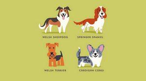 วิธีการดูความแตกต่าง สุนัขสายพันธุ์ต่างๆ จากทั่วโลก (มีภาพประกอบ)