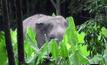 ช้างป่า 3 ตัวเข้าทำลายข้าวของชาวบ้านที่จันทบุรี
