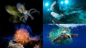 13 ภาพถ่ายใต้ ทะเล ที่ชนะเลิศการประกวด Underwater Photographer Of The Year 2019