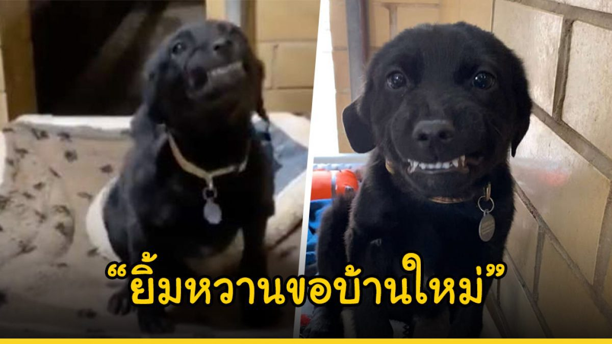ลูกหมาน้อยในศูนย์พักพิงส่งยิ้มให้กับคนที่เดินผ่านไปมา หวังให้พวกเขาสนใจรับไปเลี้ยง