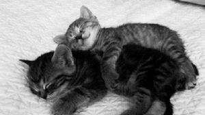 "Big Spoon or Little Spoon หนาวแล้ว นอน ""ช้อน"" กันเถอะ"