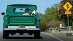Chevrolet แนะเคล็ดลับการเดินทางพร้อมกับสัตว์เลี้ยง