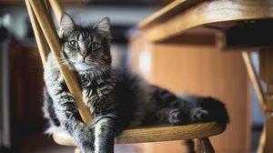 นิสัยของแมว 7 ข้อ ที่คนเลี้ยงแมวควรรู้