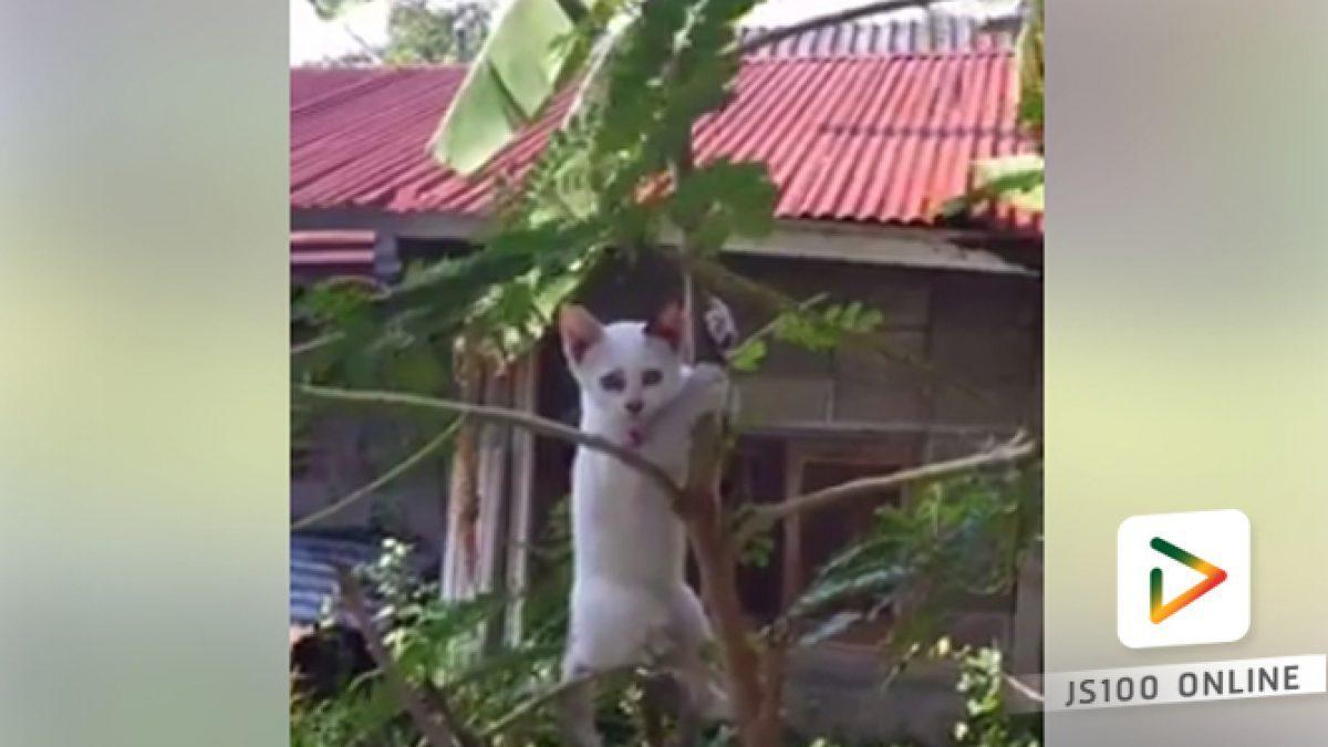 คลิปแมวหรือลิง (06-03-61)