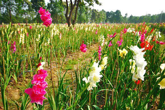 สวนสวรรค์สุพรรณบุรี