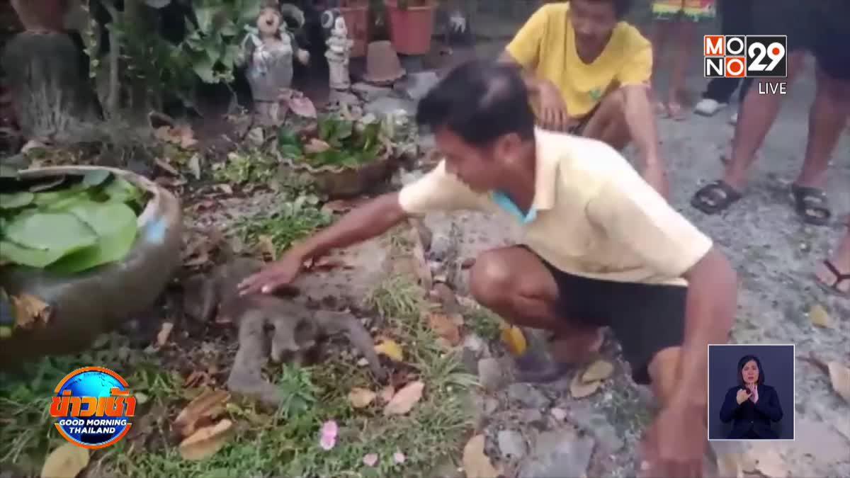 ช่วยชีวิตลิงแสมถูกไฟดูดตกจากเสาไฟสูง 10 เมตร