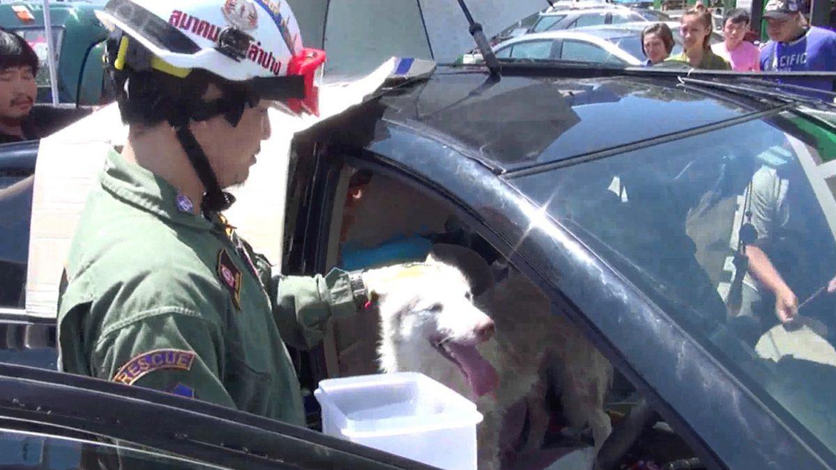 พบสุนัข-แมวกว่า 10 ตัวถูกขังลืมในรถยนต์