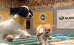 แข่งขันอเมริกันฟุตบอลลูกสุนัขครั้งที่ 12