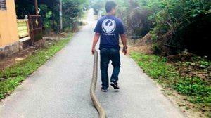 ชิวไปไหน! หนุ่มใจกล้า เดินลากงูยักษ์ไปตามถนน ไม่หวันถูกมันจะฉก
