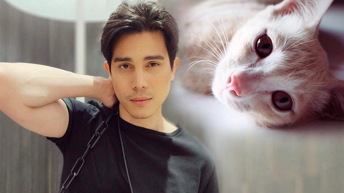 ซันนี่ สุวรรณเมธานนท์ ผู้ชายทาสแมว ที่ไม่เคยมีแมว
