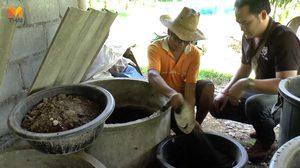 เกษตรกรพะเยาผลิตปุ๋ยมูลไส้เดือนขาย สร้างรายได้ดี
