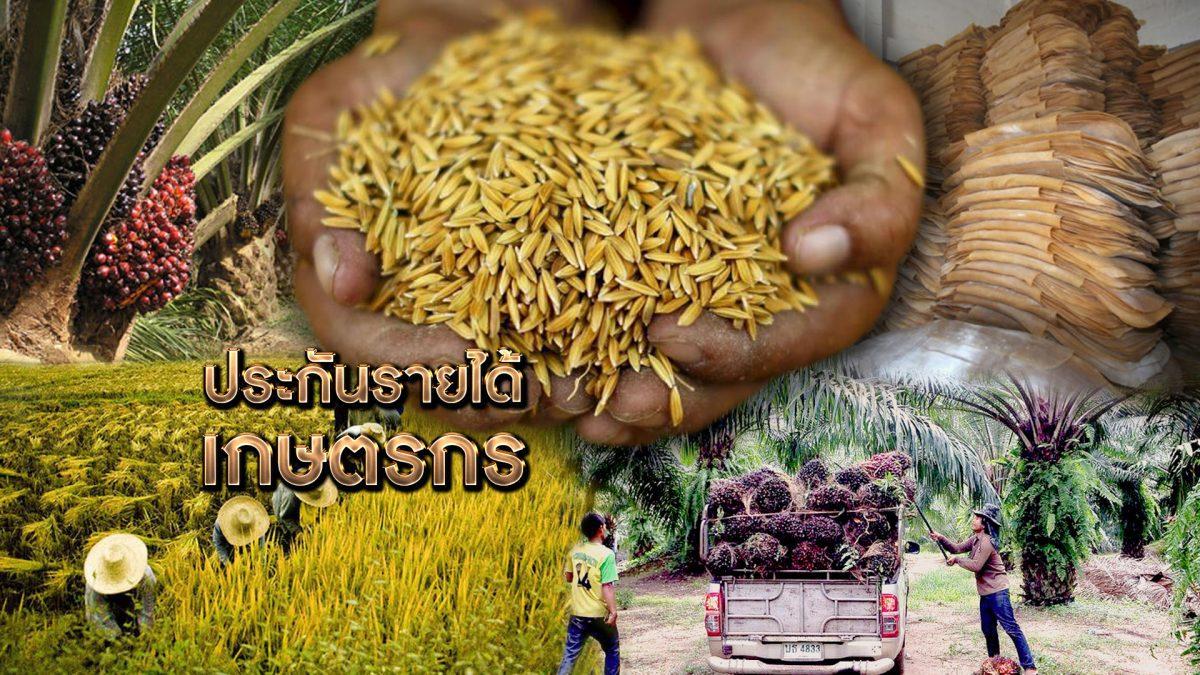 ประกันรายได้เกษตรกร 12-08-62