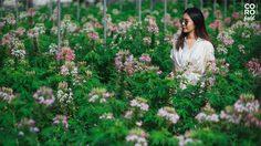 """เทศกาล """"Color De Fleurs"""" เที่ยวชมทุ่งดอกไม้ ที่ ฟาร์ม CORO Field"""