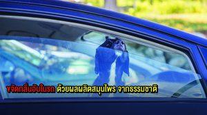ขจัด กลิ่นอับ ภายในรถ ด้วยผลผลิตและ สมุนไพร จาก ธรรมชาติ