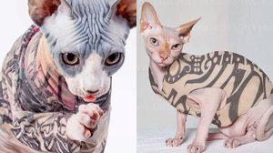 ทาสแมวถูกใจสิ่งนี้ เสื้อรอยสัก สำหรับแมว เปลี่ยนท่านให้กลายเป็นท่านที่ดูเท่ขึ้น
