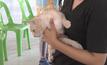 พบหมา-แมวในประเทศไทยนับ 10 ล้านตัว