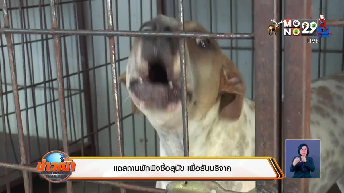 แฉสถานพักพิงซื้อสุนัข เพื่อรับบริจาค